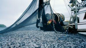 heitsuk-herring-fishery