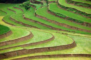 food_security_farming_agriculture_asia_22